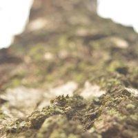 дерево :: Anastasia(Анастасия) Ruchkina(Ручкина)