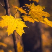 краски осени :: Алёна Николаева