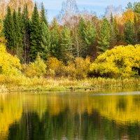 Лесное озеро :: Sergey Kiselev
