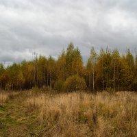 ...октябрь... :: Андрей Гр