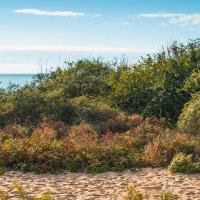 Балтийский берег... :: juriy luskin