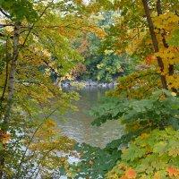 ...Осенью все чувства так светлы... :: Galina Dzubina