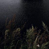 Темная  вода... холодная. :: Валерия  Полещикова