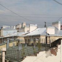 Петроградские крыши ( И на крышах растут деревья) :: Ольга ОК Попова