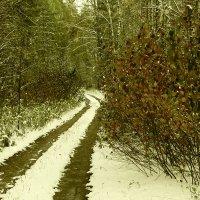 Зарисовки осеней зимы :: Сергей Воронков