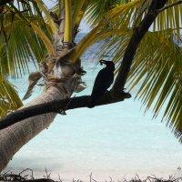 Мальдивы 14 :: Ekaterina Stafford