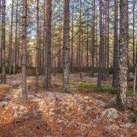 В лесу :: Михаил Вандич