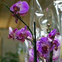 Цветы для дома :: Александр Попов