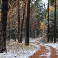 Оснежив грусть лесной дороги... :: Лесо-Вед (Баранов)