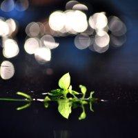 Кусочек лета :: Кристиана Моисеева