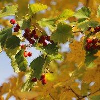Из лоскутьев одеяло на прощанье осень шьёт..... :: Tatiana Markova