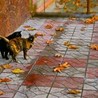 Повстречалась мне кошка-ОСЕНЬ!!!! :: Людмила Богданова (Скачко)