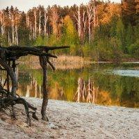 Просто лес.. :: Александр Тулупов