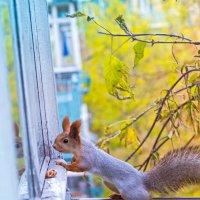 Белка смотрит в окно :: Оксана Арискина