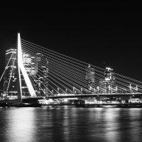 Rotterdam Erasmusbrug :: egis kunigiskis
