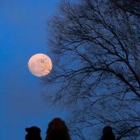 Гулянье под луной :: Николай Сапегин
