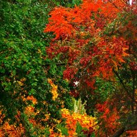 осень рыжая подружка :: Александр Корчемный