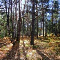 Осенний свет . :: Мила Бовкун