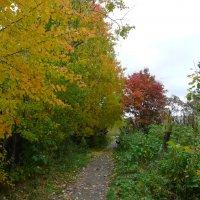 Тропинка в осень :: Виктор