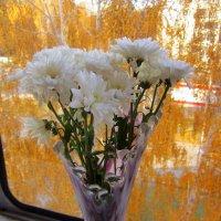 Букет хризантем . :: Мила Бовкун