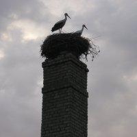 Мирные  птицы :: Vladimir Semenchukov