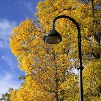День, парк, фонарь... :: Владимир Д