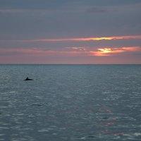 Дельфин на охоте :: valeriy khlopunov