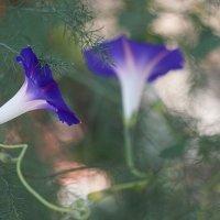 Осень в моём саду-4 (Октябрь 2015) :: Karlina *** (Елена К)