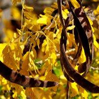 Осень в моём саду-5 (Октябрь 2015) :: Karlina *** (Елена К)