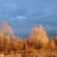 луч солнца в декабре :: prokyl