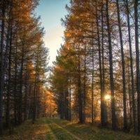 Тихая осень :: Павел Федоров
