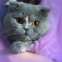 мышка :: Валерий Лазарев