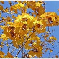Осеннее золото :: Эля Юрасова
