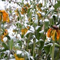 первый снег... :: Марина Титова