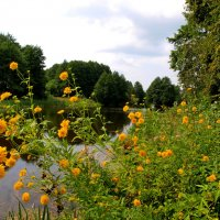 Пейзаж, цветы. :: Алексей Жуков