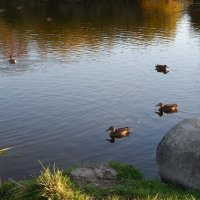 осенние мотивы :: linnud