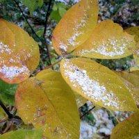 Снег кружится , снег ложится ...снег , снег , снег :: Мила Бовкун