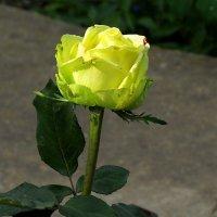 Цветы запоздалые 2 :: Natali