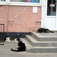 """""""собачья жизнь""""... :: Назар"""
