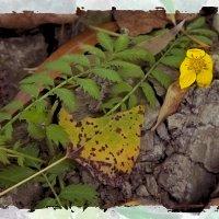 Осень под ногами... :: Лилия *