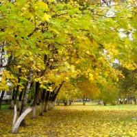 Золотая осень в городе :: Елена Семигина