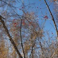Листопад в парке :: Наталья Золотых-Сибирская