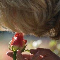 Розы :: Ольга ОК Попова