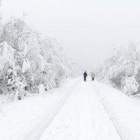По старой железной дороге :: Александр Неустроев
