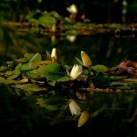 Есть в графском парке чёрный пруд...)) :: Владимир Хиль