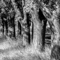 деревья :: Эрик Шульк