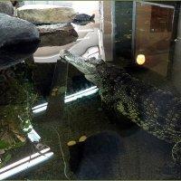 Нильский крокодил :: Вера