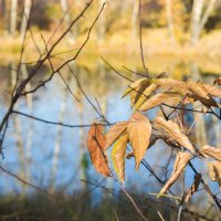 Осенняя листва :: юрий Амосов