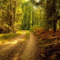 В осеннем лесу...Прекрасная пора..очей очарование... :: Алла Кочергина
