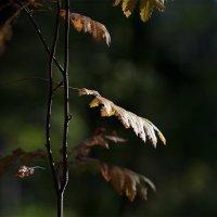 свет и тень :: Эльмира Суворова